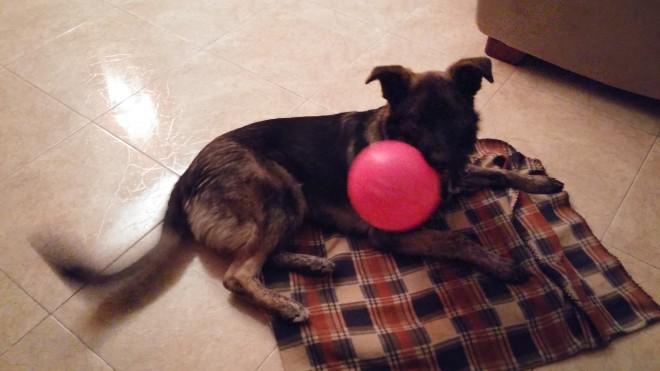 mascota con globo